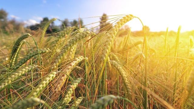 Аграрные миллионы: куда и зачем направляют дотации на сельское хозяйство - 24 Канал