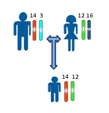 Какой материал нужен для ДНК анализа и теста на отцовство